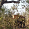 Elephants, bees and trees